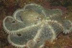 Alaska;best;invertebrates;Naut