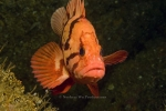 Alaska;best;fishes;Nautilus-Ex