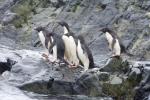 Antarctic Peninsula Images 2008-2010