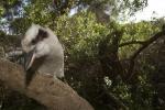 Victoria, Australia animals
