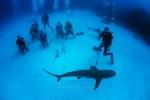 British Virgin Islands, Sharks