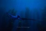 Blue Water Hunter
