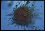 Antarctic Invertebrates
