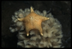 Antarctic Invertebrates