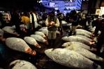 Tsukiji (Tokyo) Fish Market