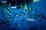 Halfmoon;Open-ocean;Giant-kelp