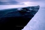 Antarctic Whales
