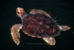 Turtle Exclusion Devices