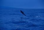Whale and Marine Mammal