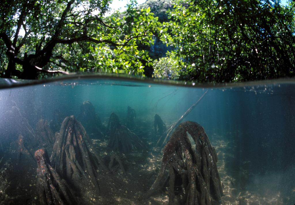 """mangroves"""""""
