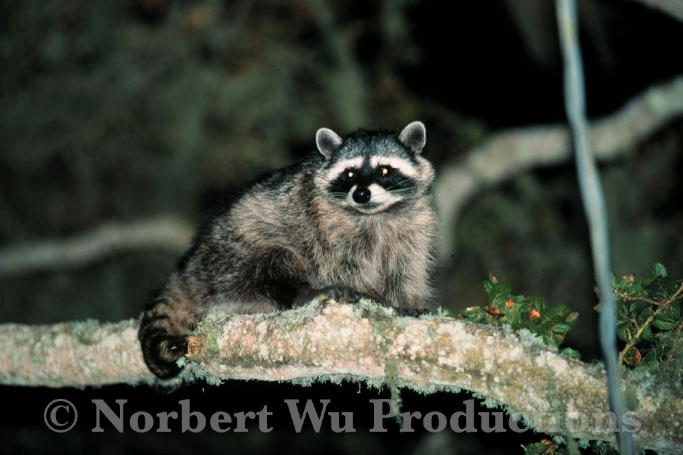 Norbert Wu: Encyclopedia of Animals Book - SCH0174